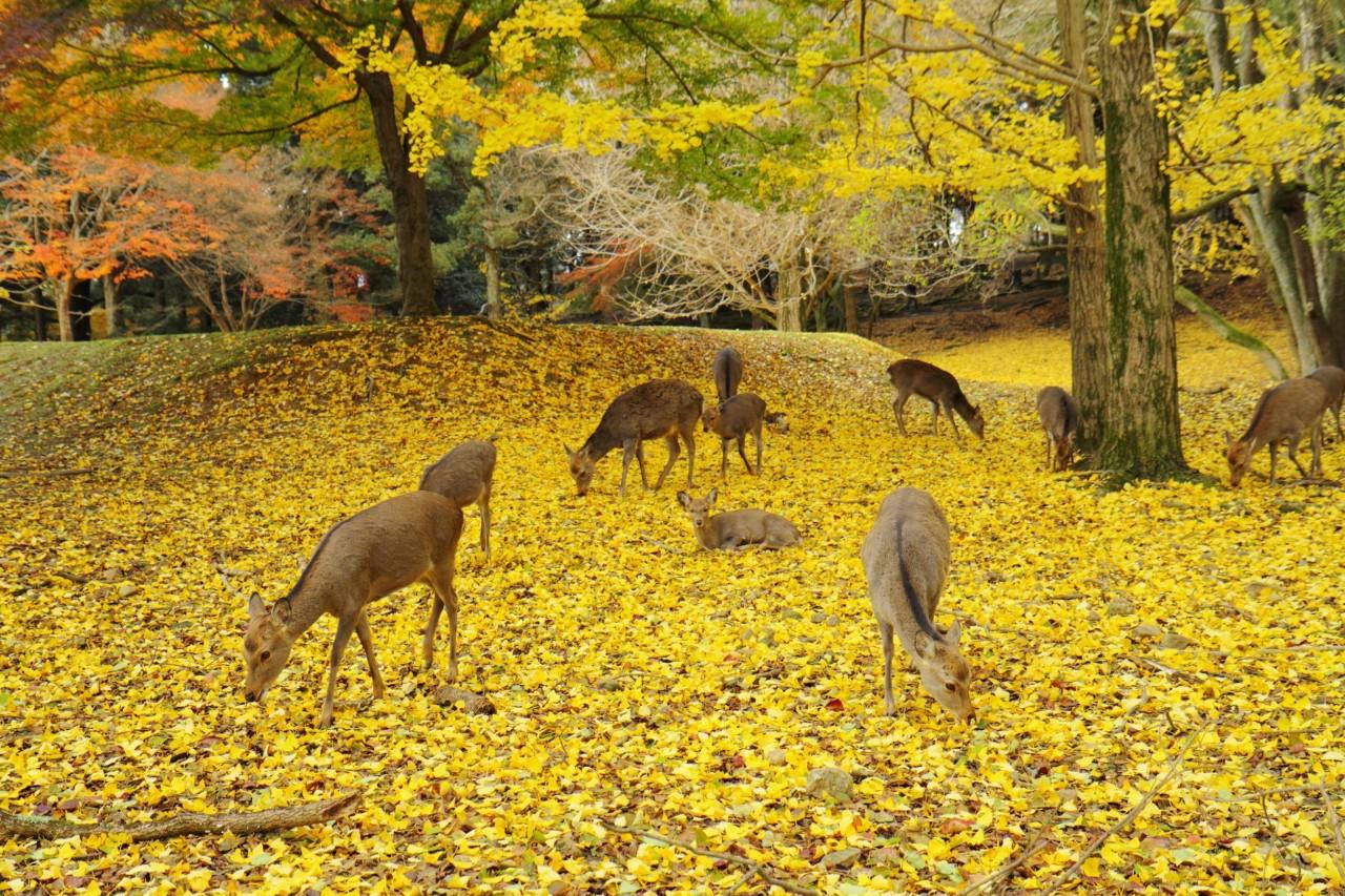 奈良奈良公園