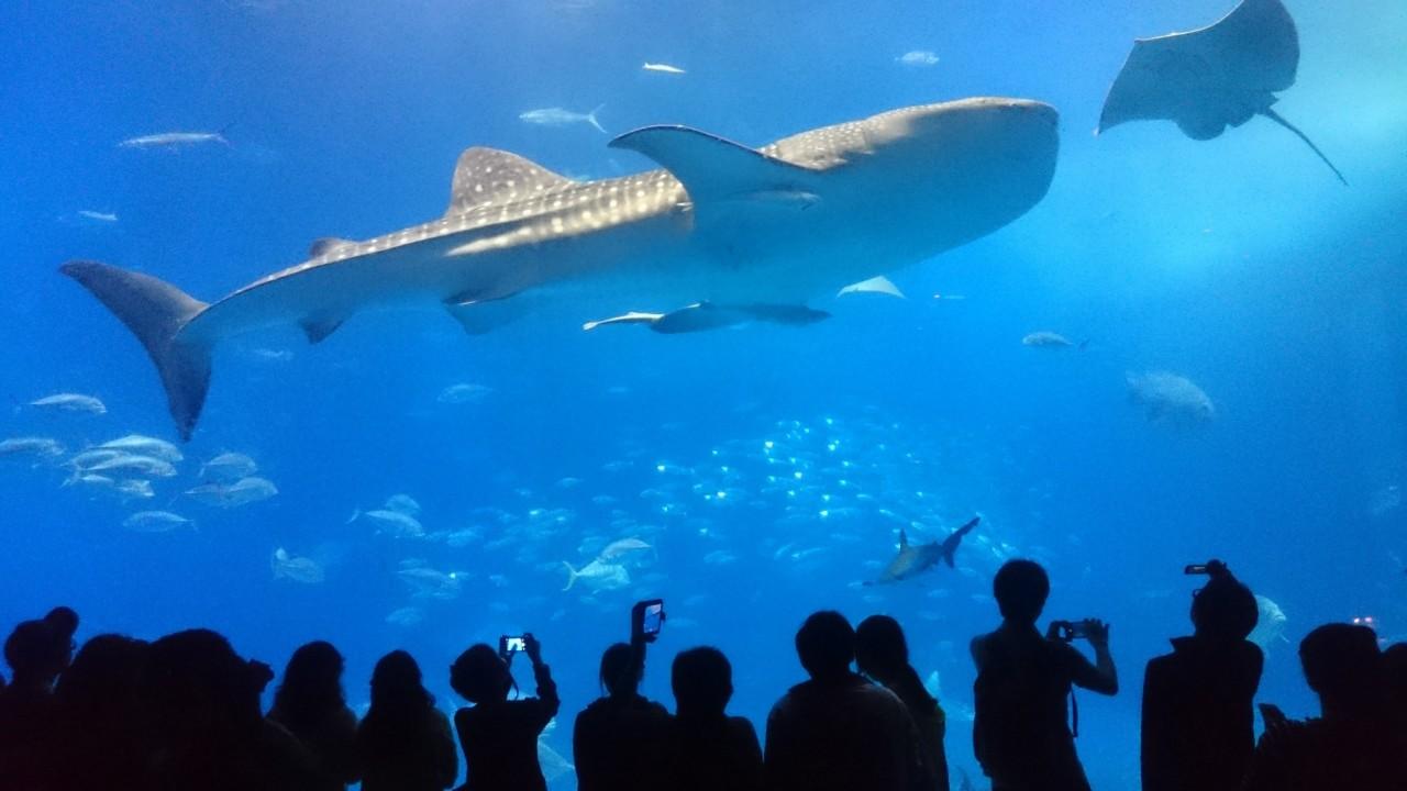 沖縄県美ら海水族館