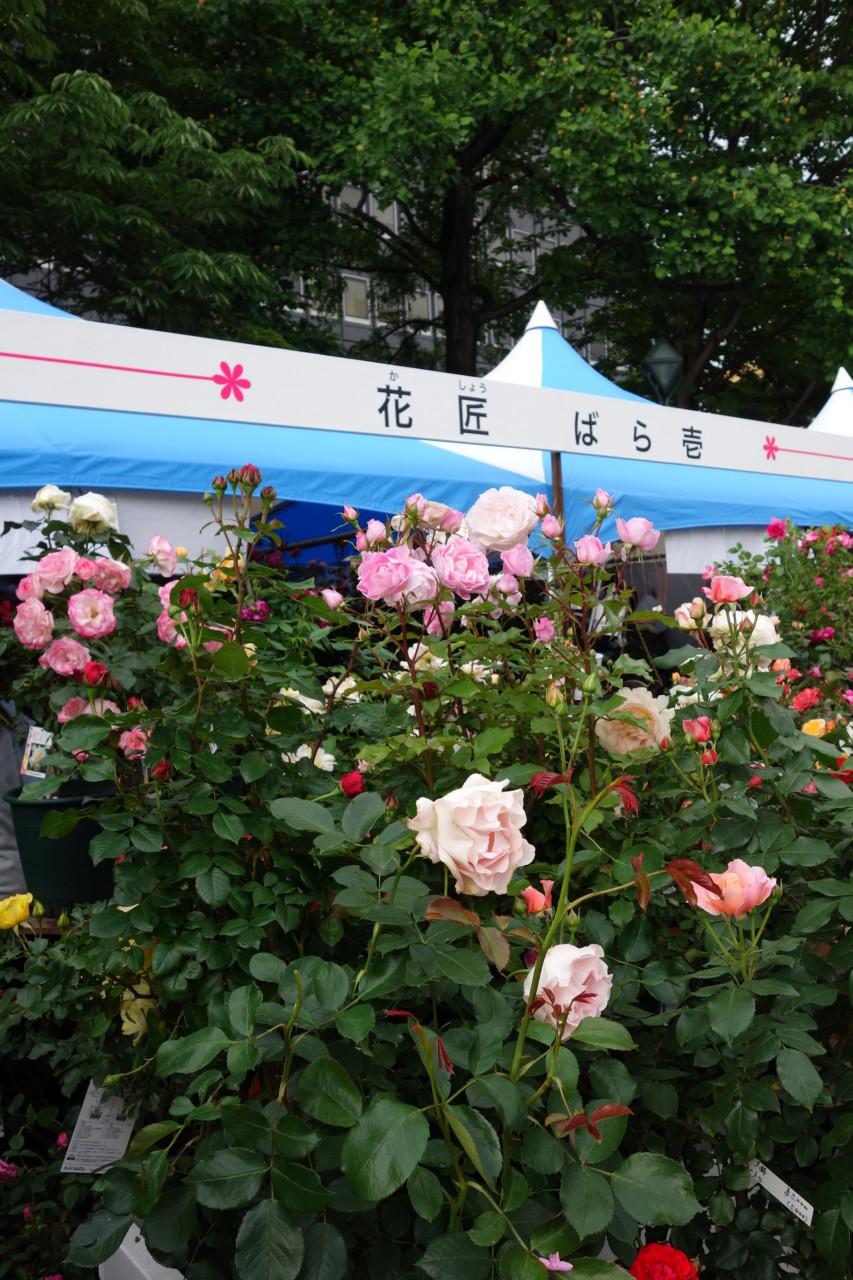 大通公園の花フェスタ