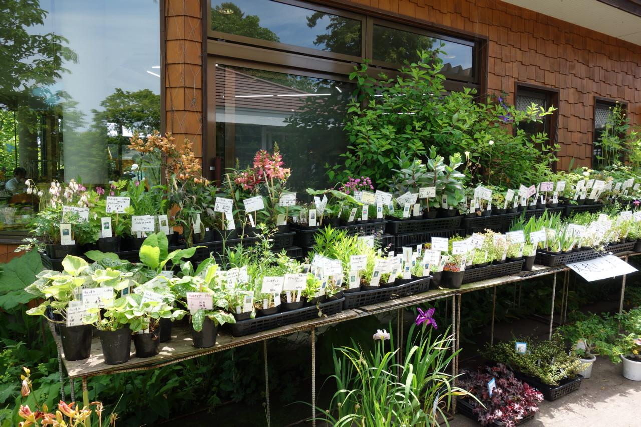紫竹ガーデン