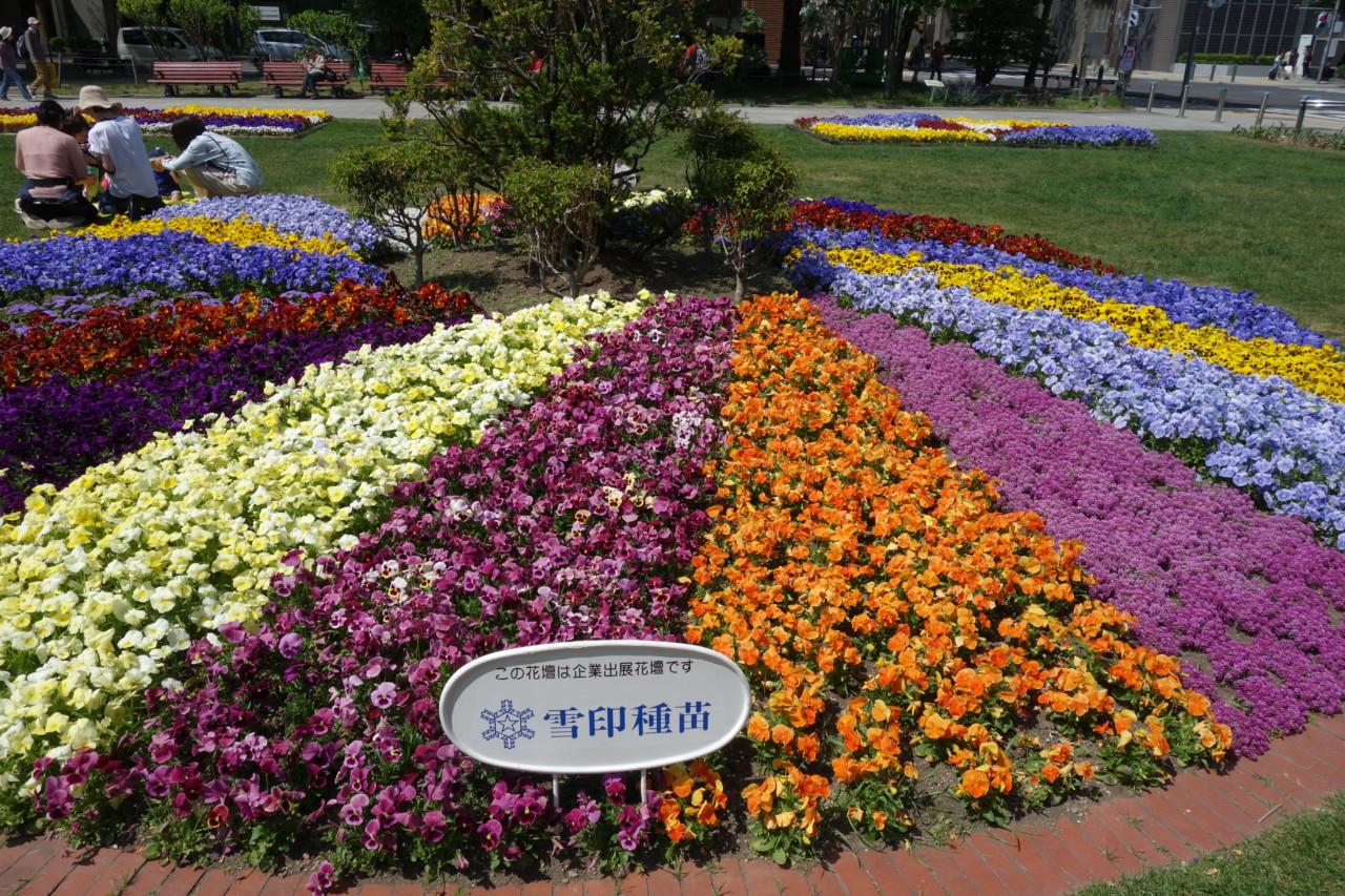 大通公園のライラック祭り
