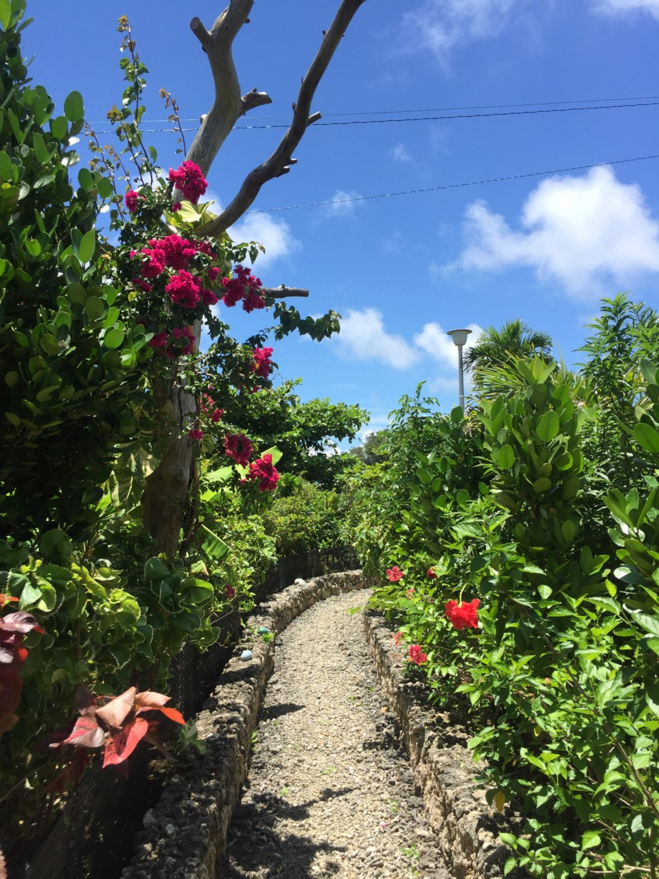 宮古島りゅうの庭